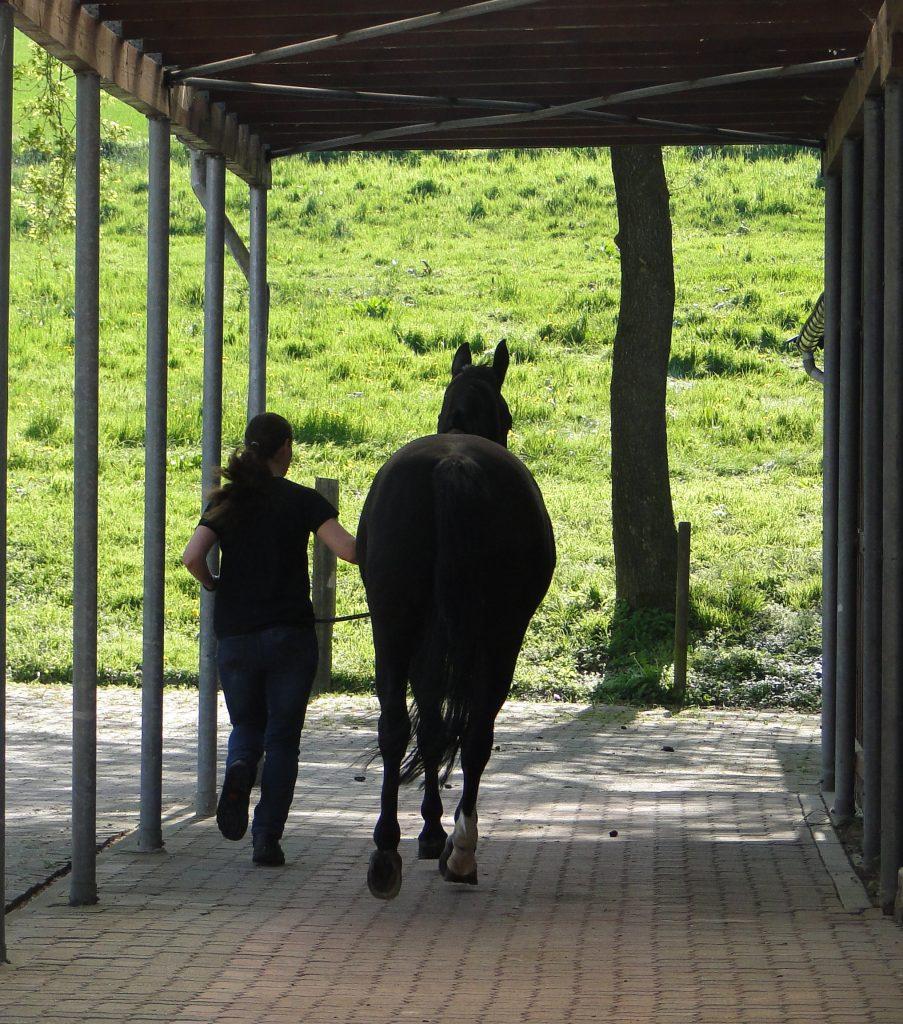 Pferde Vortrabbahn